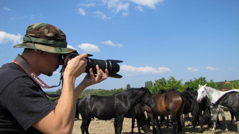 Фотография на диви коне